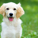 15 Points Nobody Informs You Prior To Obtaining a Pet