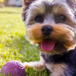 10 Easy Ways to Workout Your Canine