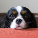 Why Do Canines Obtain Eye Boogers?