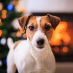 5 Simple Ways to Treat Your Pet This Vacation