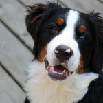 Research Study Discovers Pet Dogs Like To Make Deals With