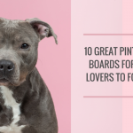 20 Terrific Pinterest Boards for Pet Lovers to Comply With