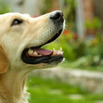 Is Your Pet Sneaky? Research Study Locates Pets Make Use Of Deceptiveness on Human Beings
