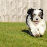 5 Self-confidence Structure Gamings For Pet Dogs