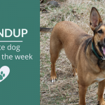 Summary 104: Fave Canine Articles & Videos of the Week