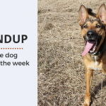 Summary 80: Fave Canine Articles & Videos of the Week