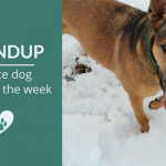 Summary 85: Fave Canine Articles, Videos & Deals of the Week