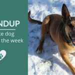 Summary 93: Fave Pet Articles, Deals & Videos of the Week