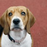 5 Pet Dog Educating Lessons I Found Out By Hand