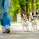 10 Ways to Make Your Canine Stroll Even More Enjoyable