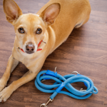 5 Factors to Stroll Your Pet Dog Everyday